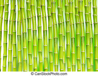 bamboo background - beautiful bamboo isolated on green...