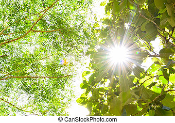 green leaf with sun flare