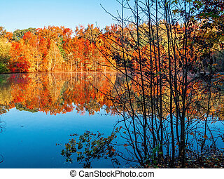 Autumn Contrast - Vibrant Autum scenery contrasted from a...