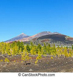 Pico Viejo and El Teide, El Teide National Park, Tenerife,...