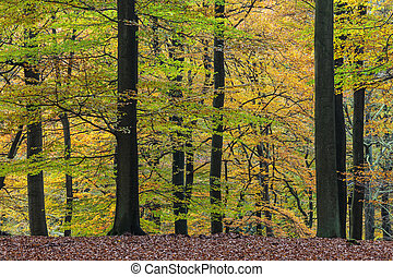 Autumn view of national park The Veluwe in Holland -...