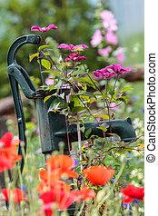 Vintage hand pump in garden - Vintage hand pump in spring...