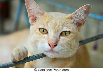 yellow-eyed cat - close up yellow-eyed cat lie down and look...