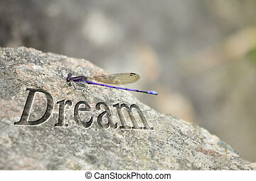 Purple Dragonfly Rock Dream - Purple Dragonfly rests its...