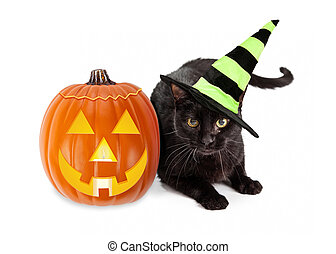 Halloween Black Cat Witch With Pumpkin - Black cat wearing a...