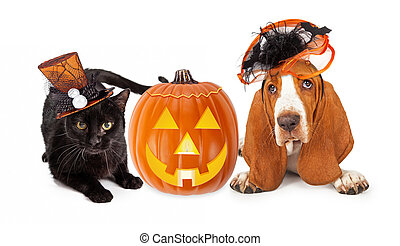 Halloween Cat and Dog in Funny Hats - Cute black kitten and...