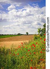 summer in Poland