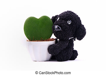Heart-shaped plant in a flower pot with dog