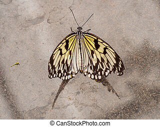 The paper kite on marmer - Yellow paper kite butterfly with...