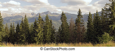 Tatra mountains - View on high Tatra mountains and forest....