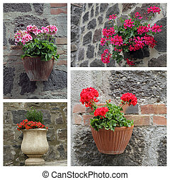 closeup of flowering plants outside house - collage