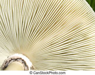 lado inferior, brânquias, cogumelo, fungos, textura