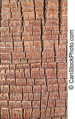 Background texture of palm tree bark - Background texture...