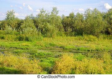Summer landscape - Summer landscape on a sunny day, Belarus...