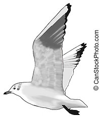 Black-headed Gull - Larus ridibundus - winter