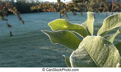 Frosty morning - Frost grass and frost tree leaf in frosty...