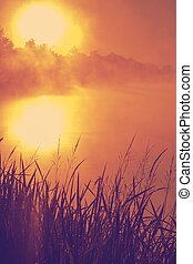 Nice sunset over lake - wild grass over big sun sunset...