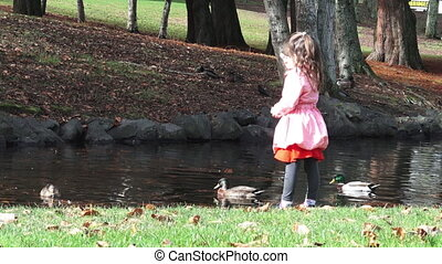 girl feed ducks - Little girl age 05 feed male and female...
