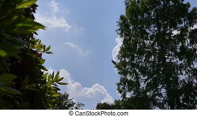 Blue sky and a plane flies by far away - On the left side a...