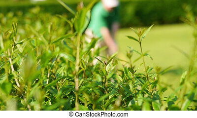 Close up of a bush and a man playing golf in the blurred background