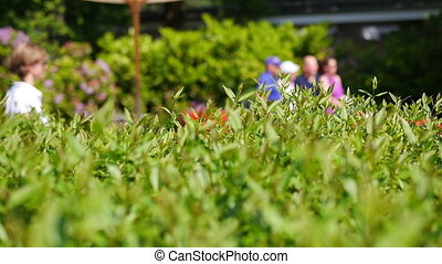 Close up of a bush with people in the background - Close up...