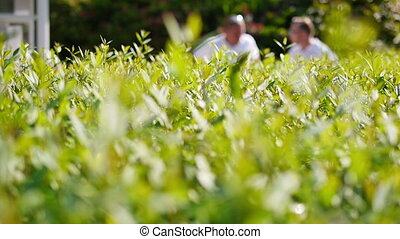 Close up of a green bush with people in the background -...