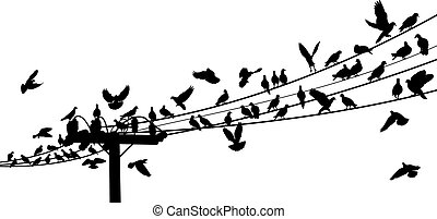 Bird roost - Vector silhouettes of birds roosting on...