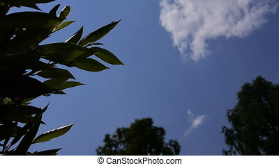 View from the ground up to the blue sky on a sunny day with plants and trees around