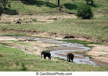 Elephant Tanzania, Africa - Elephant - Tarangire National...