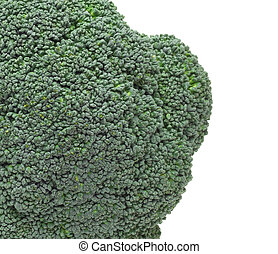 close up of Broccoli - Broccoli isolated on white background