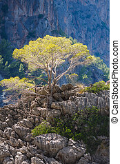 Tree on the rock