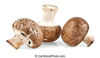 mushrooms on white background