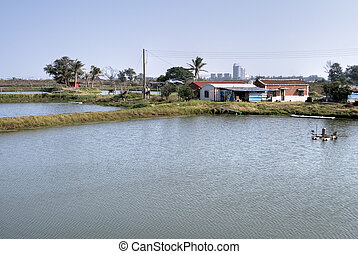 Rural scenic of fish pond and house.