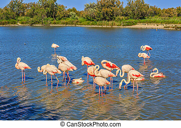 Flock of pink flamingos arranged to sleep - Flock of...