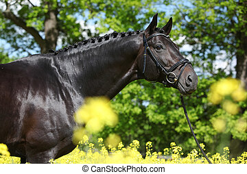 Amazing black dutch warmblood with yellow flowers - Amazing...