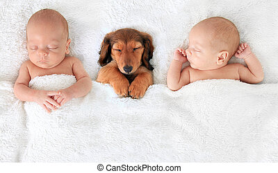 Newborn baby and puppy - two Sleeping newborn babies with a...