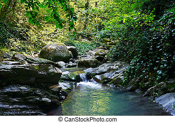 Marvellous mountain stream among southern forests -...