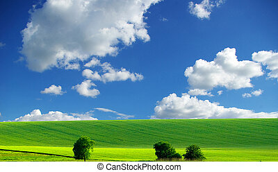 clouds and field - white clouds and a green field