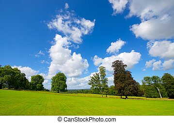 Normandy - Green meadow with trees in Normandy, France
