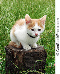 little kitten - Cute little kitten on the tree...