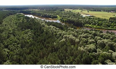 HD - View of the forest river. scene 01