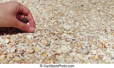 A mans hand takes seashells on the beach - Female hand...