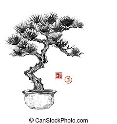 Bonsai pine tree hand hand-drawn with ink in traditional...