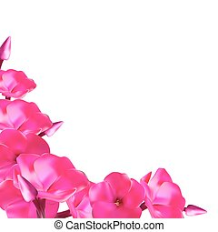 Pink Phlox Flowers Vector Illustration EPS10