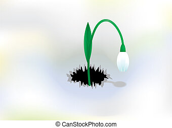 vector background with snowdrop