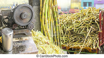 Sugercane bussiness in panorama-carying ,storing,selling...