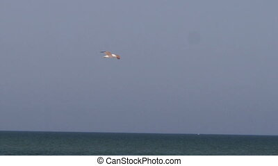 Seagull flying over the sea. - Large white, gray seagull...