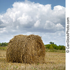 Haystacks on the grain field after harvesting - Straw...
