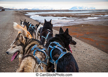 Summer dog sledding, first person perspective