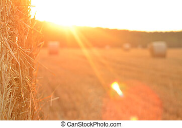 Field after harvest with straw bales at sunset